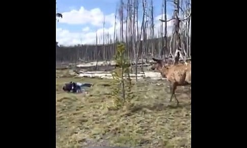 Screenshot of the video taken by Jody Tibbitts.