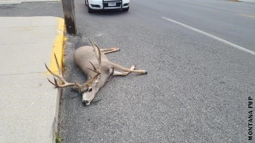 The animal was found dead on the side of the road in the 400 block of N. Main Street