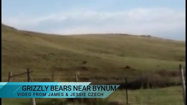 James and Jessie Czech spotted a couple of grizzly bears near Bynum on Saturday.