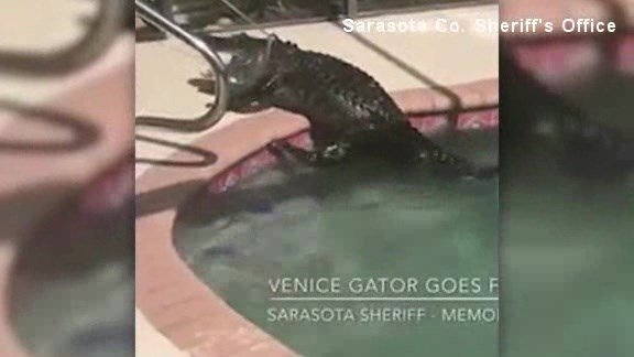 Sarasota County Sheriff's deputies were called to a Venice, Florida, home Monday to help relocate the uninvited guest, which was measured at 7 to 8 feet long.