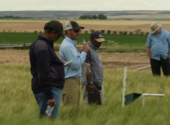 Montana researchers and farmers trying new weapons in the fight against crop pests (MTN News photo)