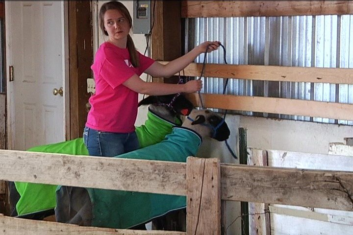 4H Livestock Member Emily Berg (MTN News photo)