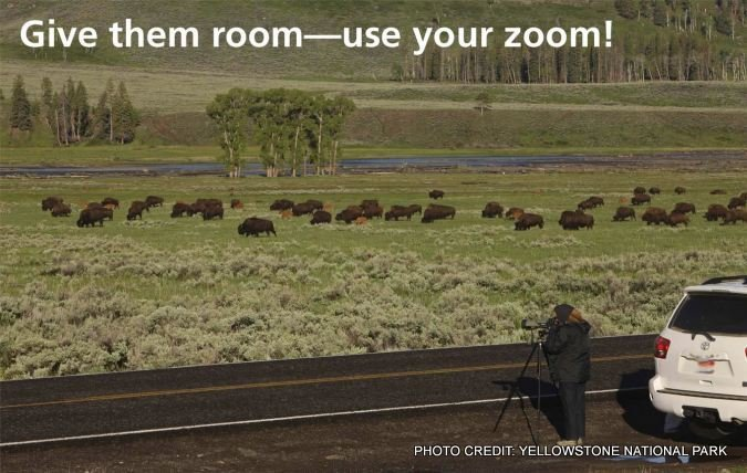 Yellowstone National Park posted this message after several tourists were injured by getting too close to bison