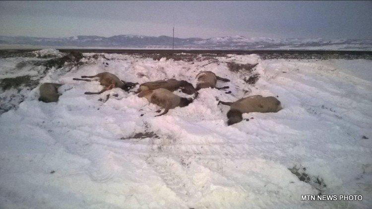 A herd of elk got hit by a train near East Helena sometime on Wednesday or Thursday.