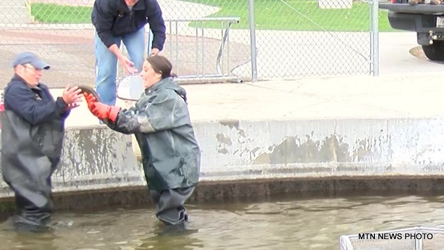 On The Job Giant Springs Fish Hatchery