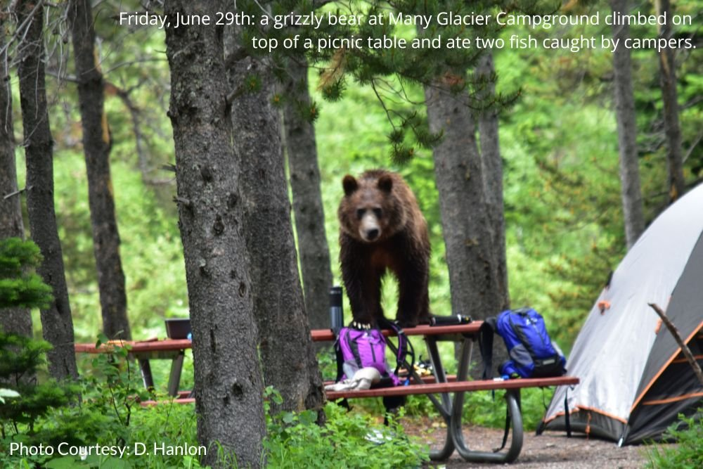 Camping Restriction Lifted At Many Glacier; Grizzly Bear Still Not Caught