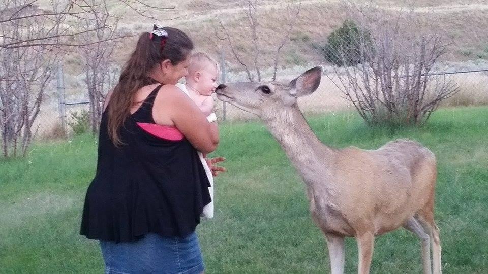 FWP Official Defends Killing Forsyth Familys Pet Deer